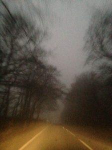 misty path.JPG